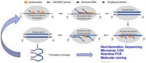 Yikon Genomics: Schematische Darstellung der MALBAC™-Technologie